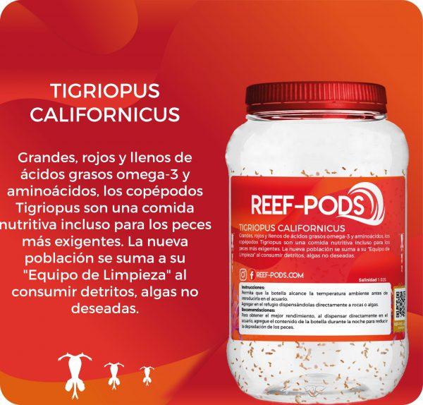 TIGRIOPUS CALIFORNICUS